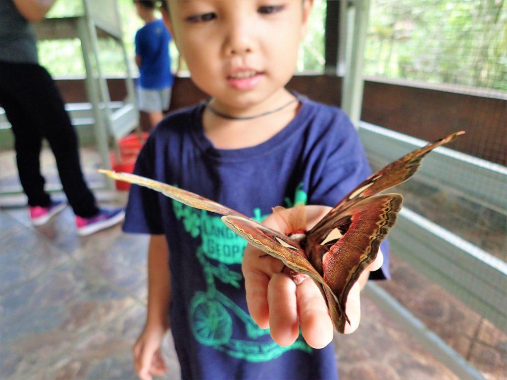 butterflyparkbali