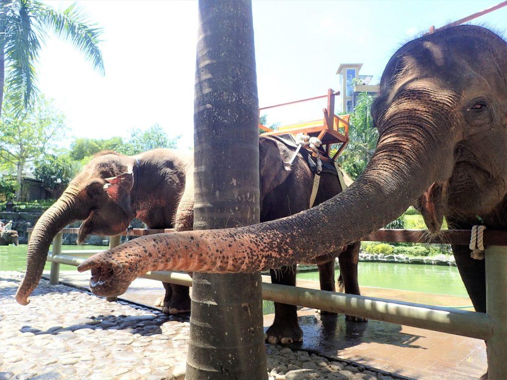 バリズー 象